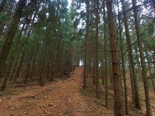 Ścieżka nie jest trudna, tylko momentami robi się dość stroma