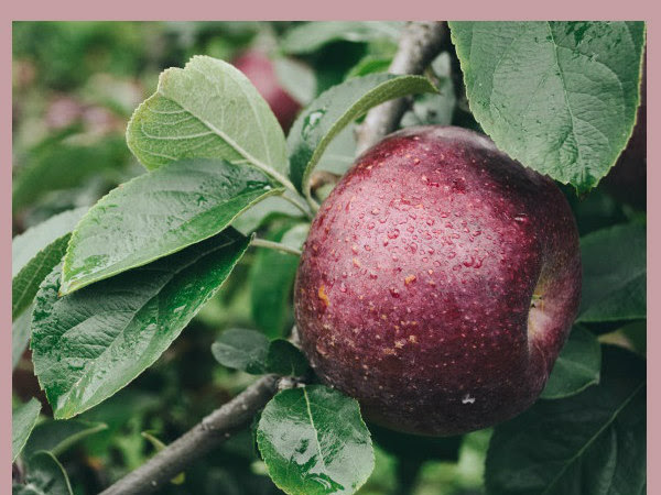 How To Plan And Plant A Homestead Orchard