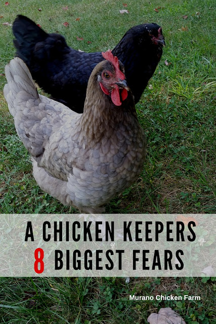 "I asked ""what worries you the most about your chickens?"" and chicken keepers answered! Here's what they had to say..."