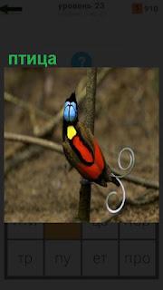 сидит разноцветная птица спиной на ветке