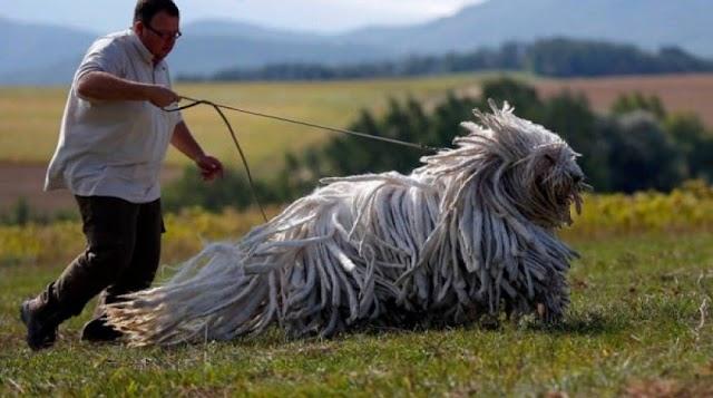Κι όμως ζουν ανάμεσά μας - Τα πιο περίεργα ζώα του κόσμου