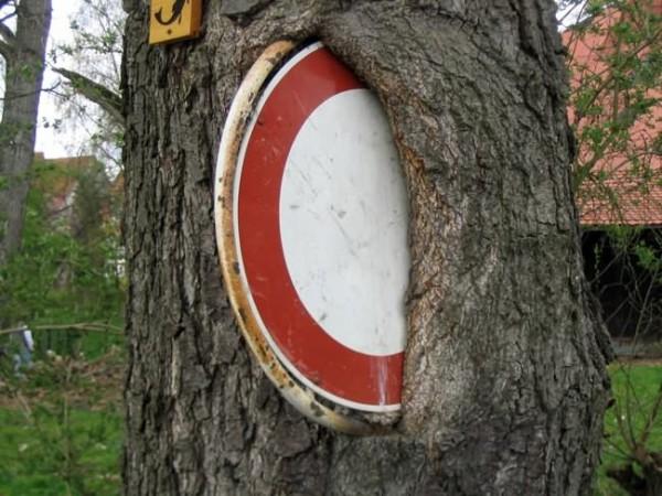 أشجار تبتلع كل ما يعترض نموها 4-600x450.jpg