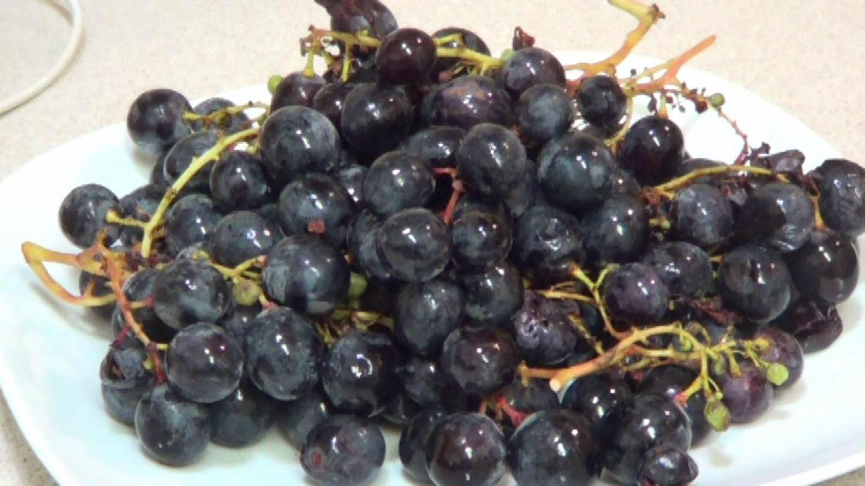 Racimo de uva para vino