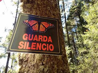 Monarch butterfly preserve sierra chincua michoacan mexico oyamel fir reforestation