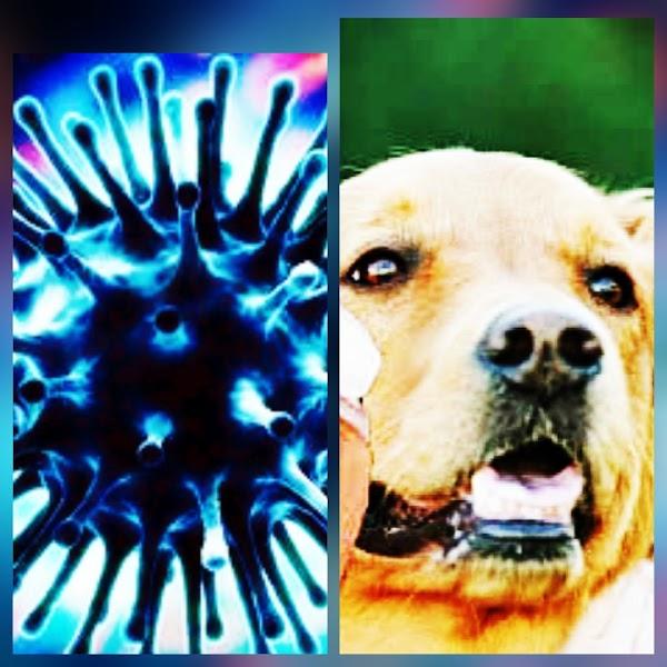 Perros podrían ser el origen de la nueva influenza.