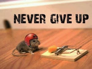 never-give-up-rat-whatsapp-dp-updated-latest