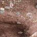 Lara: Asesinó a su pareja y sus familiares le ayudaron a enterrar el cuerpo en el patio de la casa