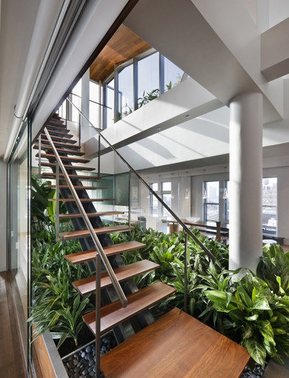 Photo of wooden staircase leading to the rooftop terrace with vegetation below