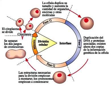 Reproducción - biología: niveles de reproducción, selección natural y reproducción