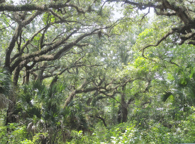 Live Oak Hammock at Long Key Natural Area and Nature Center