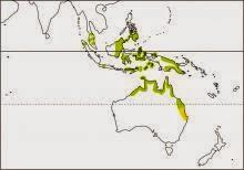 little bronze cuckoo Chalcites minutillus