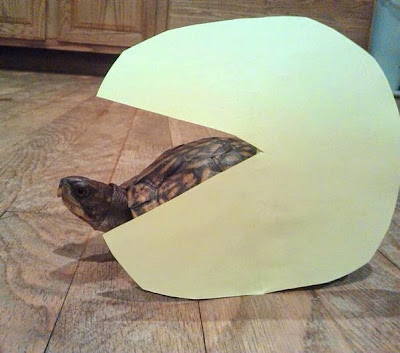 Claira sea turtle Pac-Man Troopa tortoise Koopa eaten