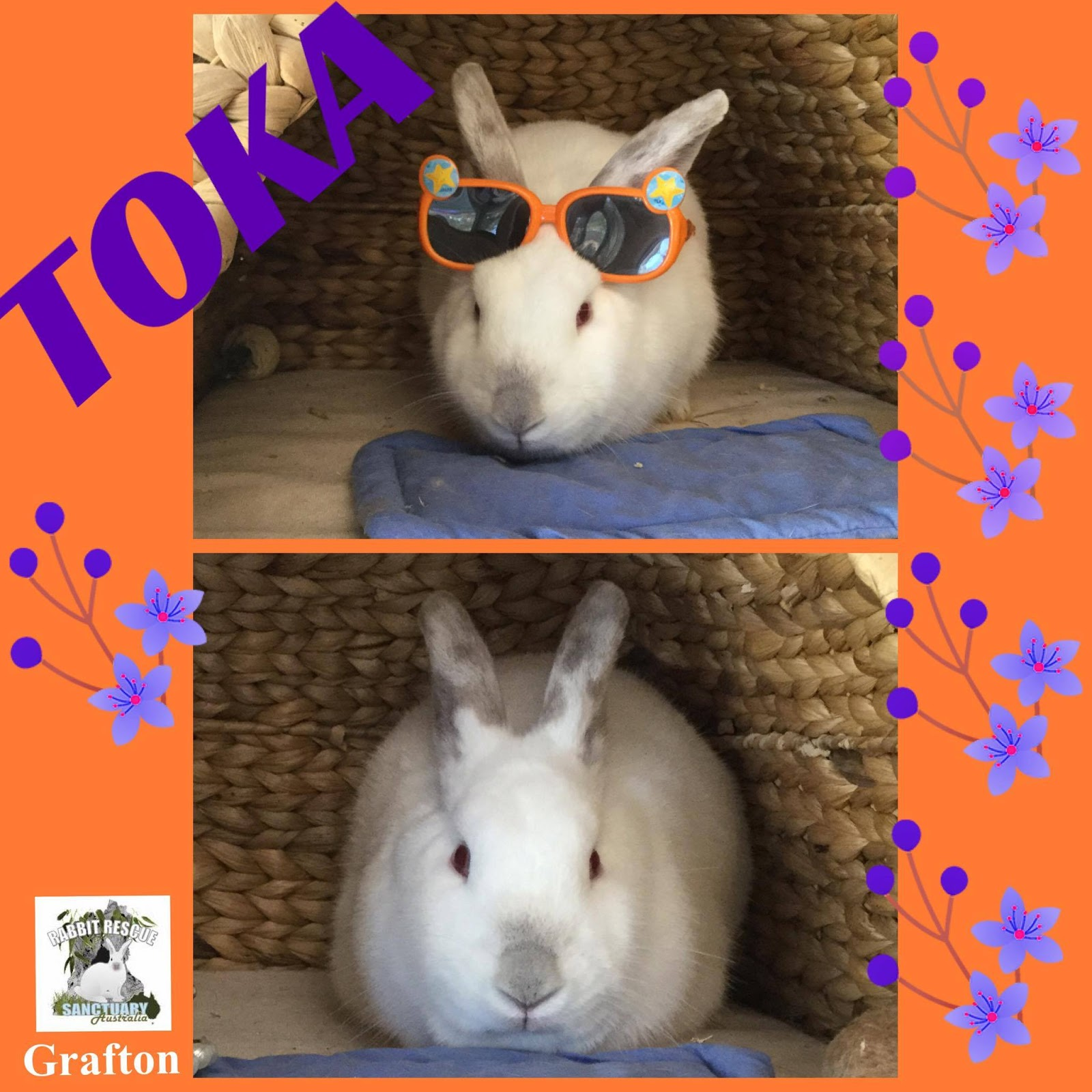 150 Rescue Rabbits For Adoption To Indoor Homes Where They Will Be A House  Rabbit And