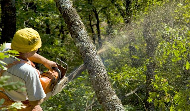 Απίστευτο: Χαρίζουν τα ελληνικά δάση σε καταπατητές!