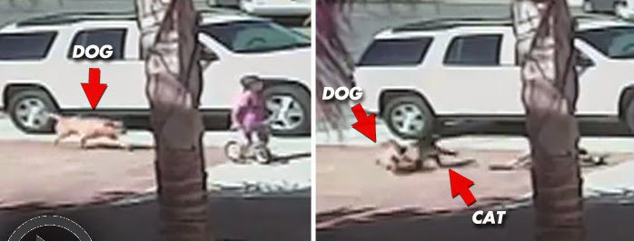 Cat Saves Boy From Vicious Dog Attack