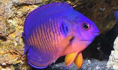 صور اسماك ملونه اجمل صور الاسماك الملونه 2021