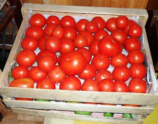 Доспевают помидорки, 29 августа