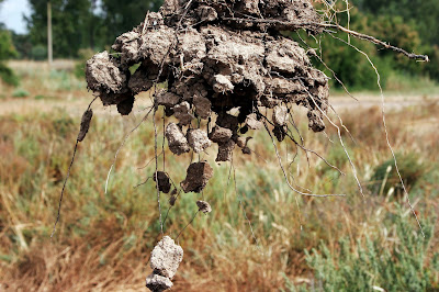 Tipe-Tipe Agregat Tanah dan Pengaruhnya Bagi Kestabilan Erosi