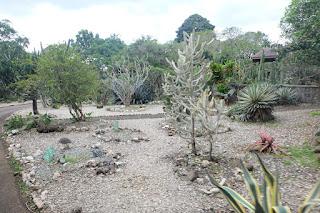 area kaktus kebun raya bogor