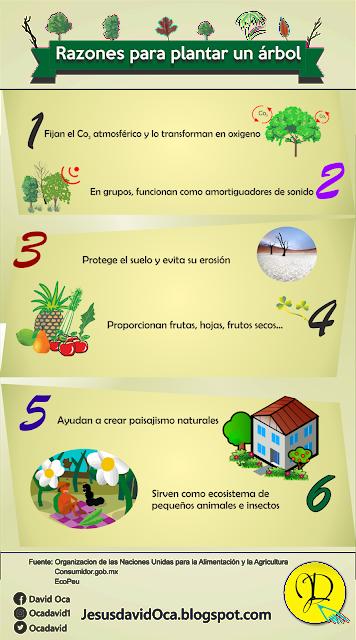 razones sembrar plantar arboles