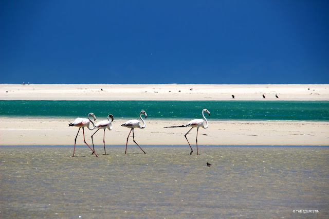 South Africa, ocean, DE Mond Nature Reserve, Overberg, flamingo, open space, nature, wildlife