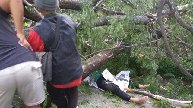 Pasangan suami istri tewas mengenaskan akibat tertimpa pohon tumbang