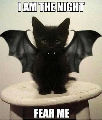 Click for more Halloween cat funnies!  Funny halloween cat memes, cartoons, and photos to make you laugh!  Creepy, cute, and grumpy kitties -- lolcats and kittens for everyone!  via Devastate Boredom