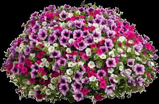 Arbustos con flores - Arbusto pequeno con flores ...