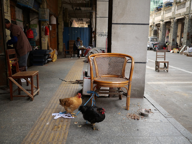 two chickens tied to a chair in Wuzhou