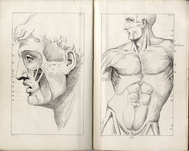 Research of Artistic Anatomy: 5月 2016