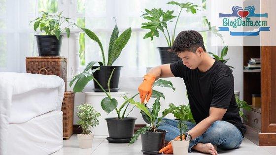 Tips dan Cara Merawat Tanaman Indoor yang baik dan benar