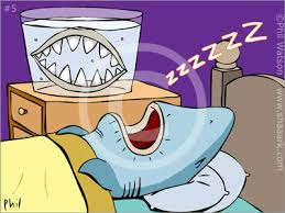 The (Not) Sleepy Shark - a bookwrap