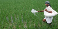 GST-Council-cuts-tax-rate-on-fertiliser-to 5-pc-from-12 pc