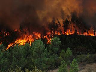 Crea Veracruz método innovador para detectar incendio forestal