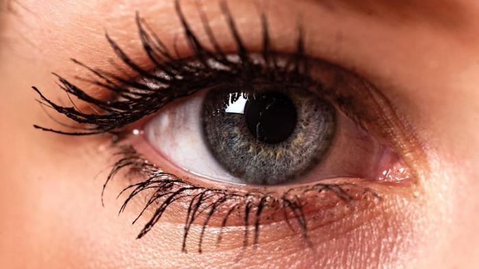 The retina is opposite