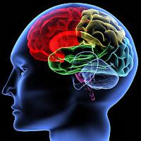 Kebiasaan Yang Tidak Baik Untuk Otak
