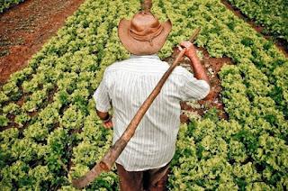 http://vnoticia.com.br/noticia/2888-ibge-divulga-em-sao-francisco-de-itabapoana-dados-preliminares-do-censo-agropecuario