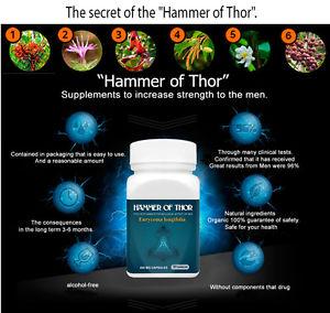 info alamat toko agen hammer of thors original jual harga grosir