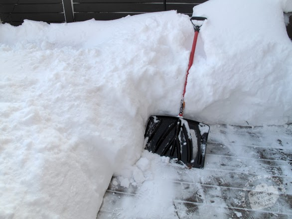 How To Use Cat Litter To Get Car Unstuck