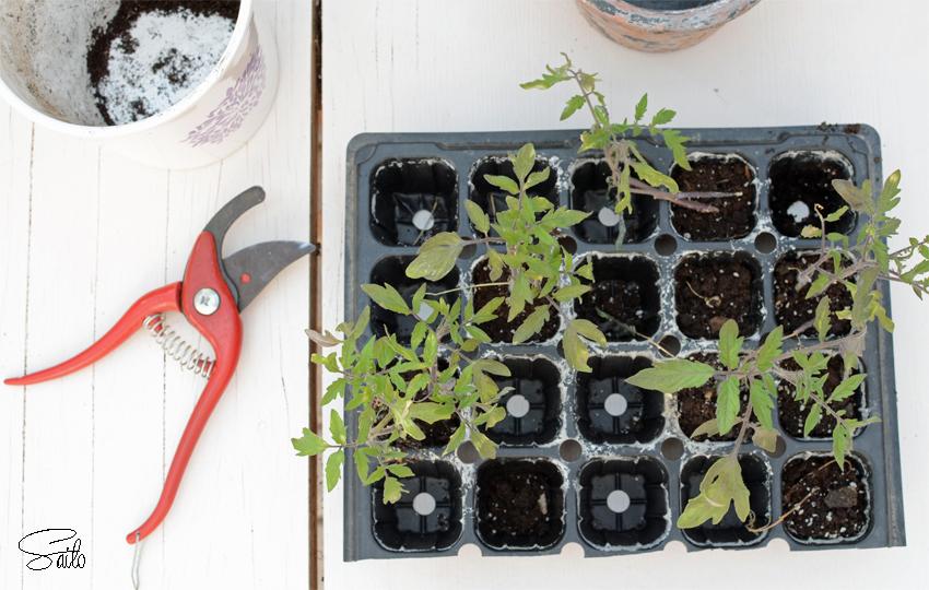 semilleros invernadero