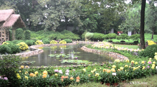 chrysanthemums and pond, Suzhou, China