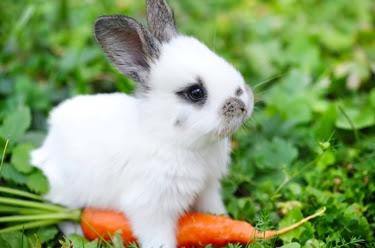 Sejuta Manfaat dari Wortel Makanan Kesukaan Si Imut Kelinci
