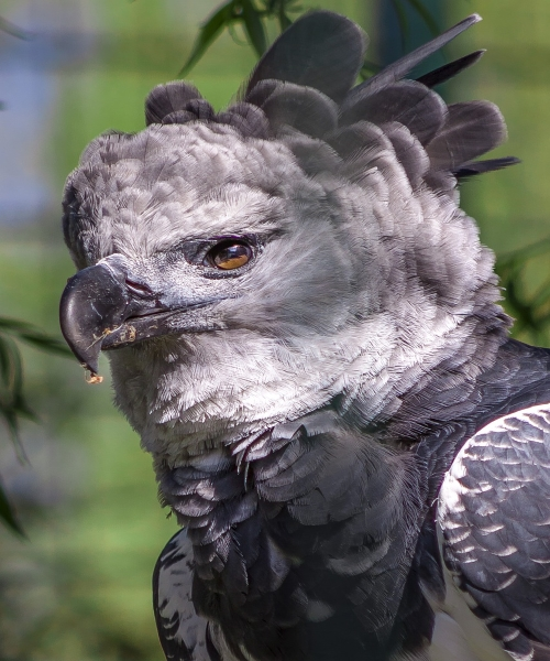 https://www.bioorbis.org/2018/09/harpia-rainha-florestas.html