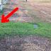 Por una extraña razón la tumba de su hijo de 30 años estaba muy verde. Cuando ella descubre la verdad estalla en lagrimas.