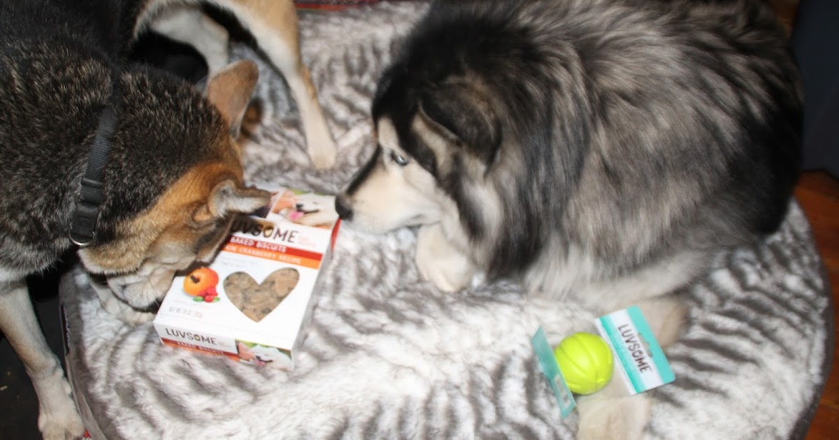 Chiil Mama Review Luvsome Dog Treats Toys And Food Exclusively