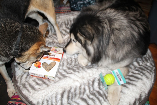 REVIEW: Luvsome Dog Treats, Toys and Food Exclusively at Kroger