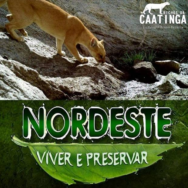 "Projeto ""Bichos da Caatinga"", desenvolvido por santacruzenses, será destaque hoje na Globo Nordeste"