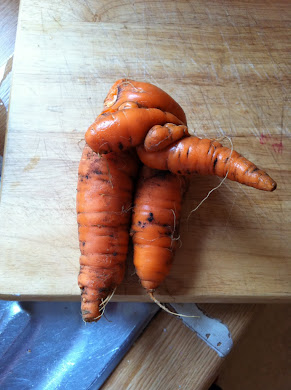 odd looking carrot from my veg patch!