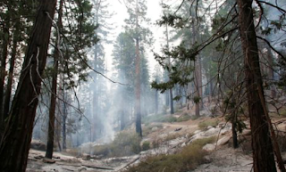 Sanctuary city illegal immigrant sparks $61 million fire in Sequoia National Forest