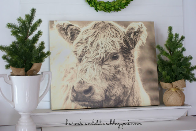 Farmhouse Scottish Highland cow wall art canvas